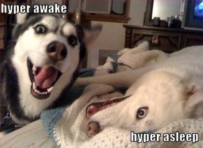 hyper awake  hyper asleep