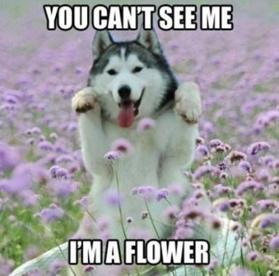 you can't see my i'm a flower