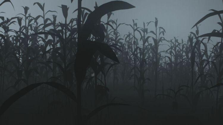 inside cornfield