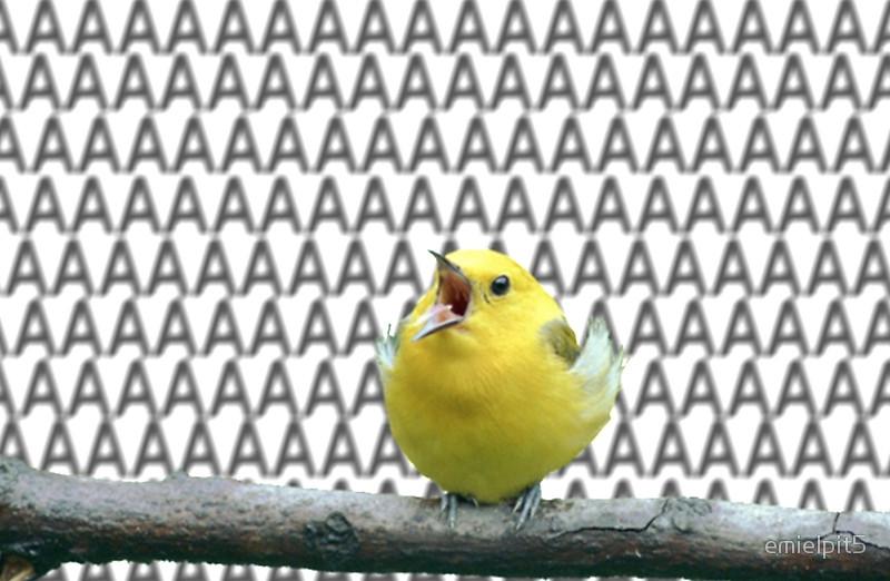 bird-aaaaaaaaa.jpg